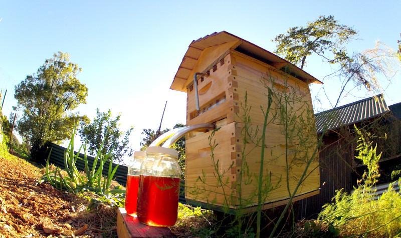 อยากกินน้ำผึ้งแท้จากธรรมชาติ? เปิดก๊อกจากกล่องเลี้ยงผึ้งหลังบ้านดูมั้ย
